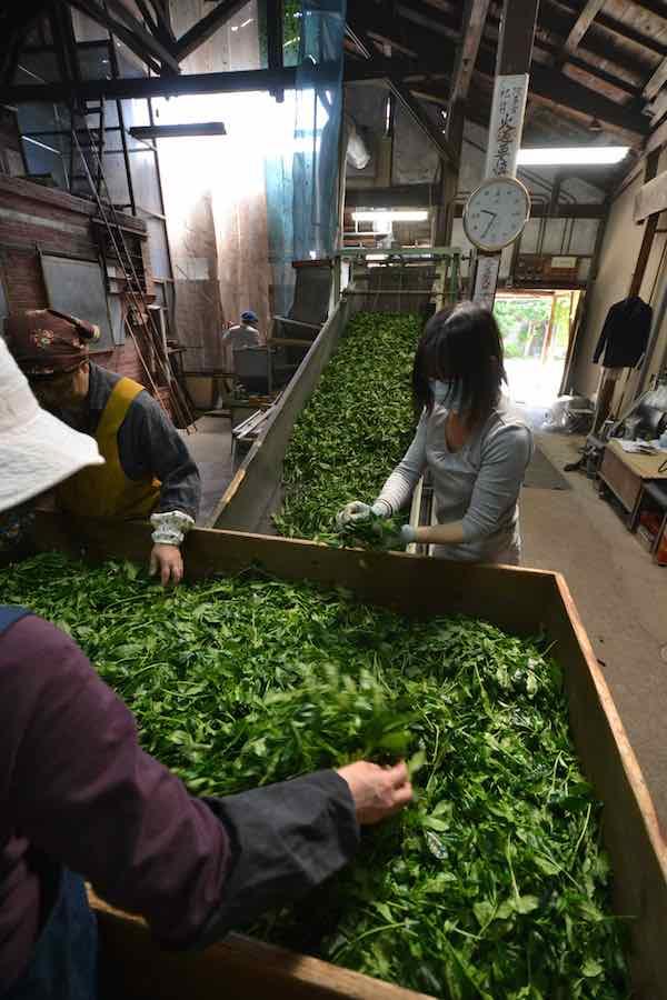 製茶工場*
